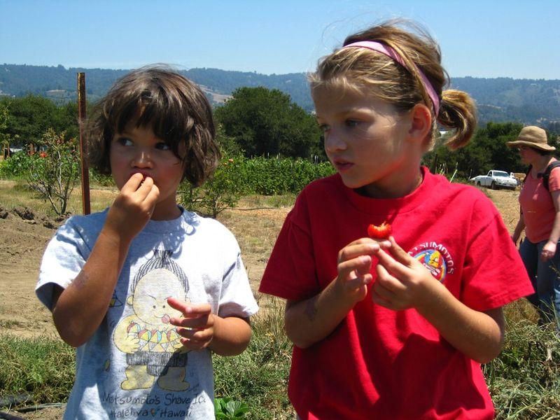 Berrypickers